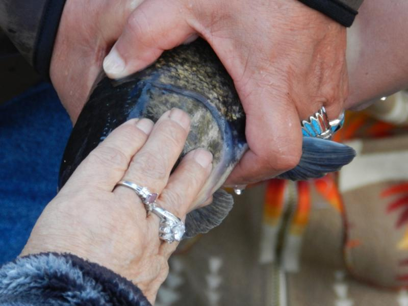 A suckerfish receives a blessing from a Klamath tribe member.