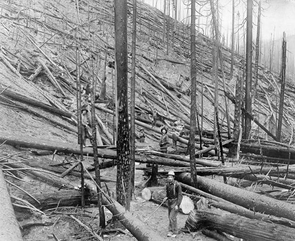 "The Big Burn of 1910 devastated northern Idaho. This is the result of a wildfire ""hurricane"" in a heavy stand of Idaho white pine on Little North fork of St. Joe River, Coeur d'Alene, Idaho, 1910."