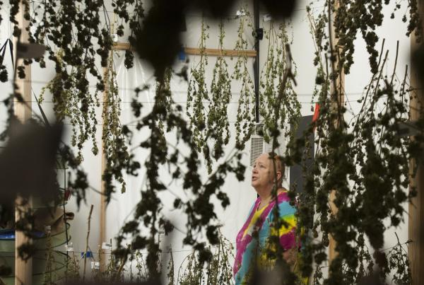 Susy Wilson, of WOW Weed in Dallesport, Wash., says she plans to grow pot indoors and out.