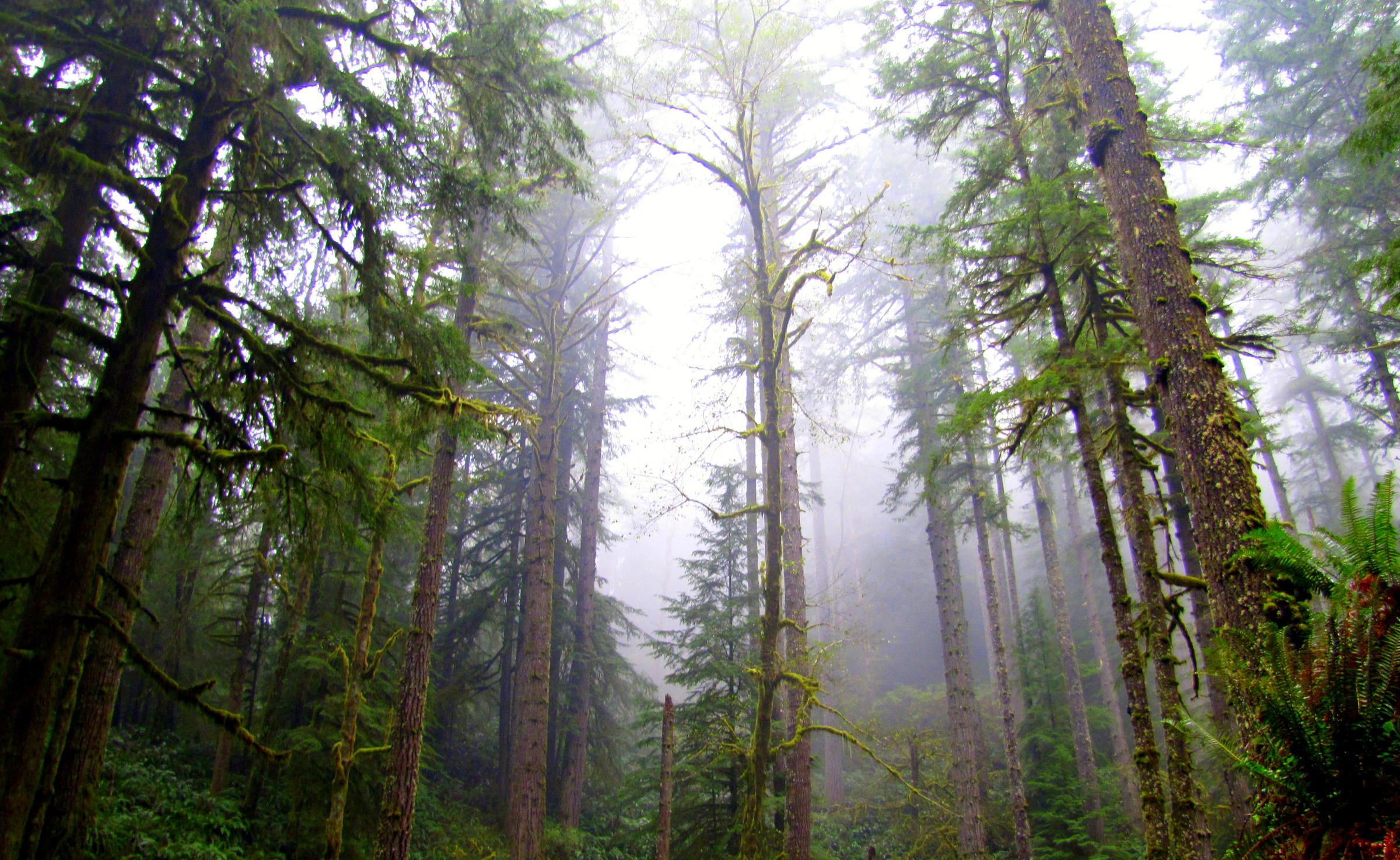 Oregon's State Forest Sale Moves Closer