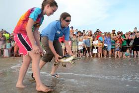Michele Lamping releasing sea turtle