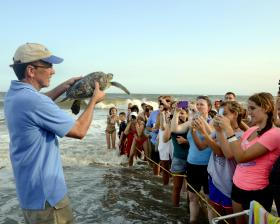 NC Aquarium Director Allen Monroe gets ready to release sea turtle