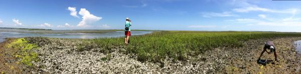 Middle Marsh Panorama - Justin Ridge and Dr. Antonio Rodriguez film in Middle Marsh, NC, in preparation for a workshop for NC teachers taking place June 16 - 18.
