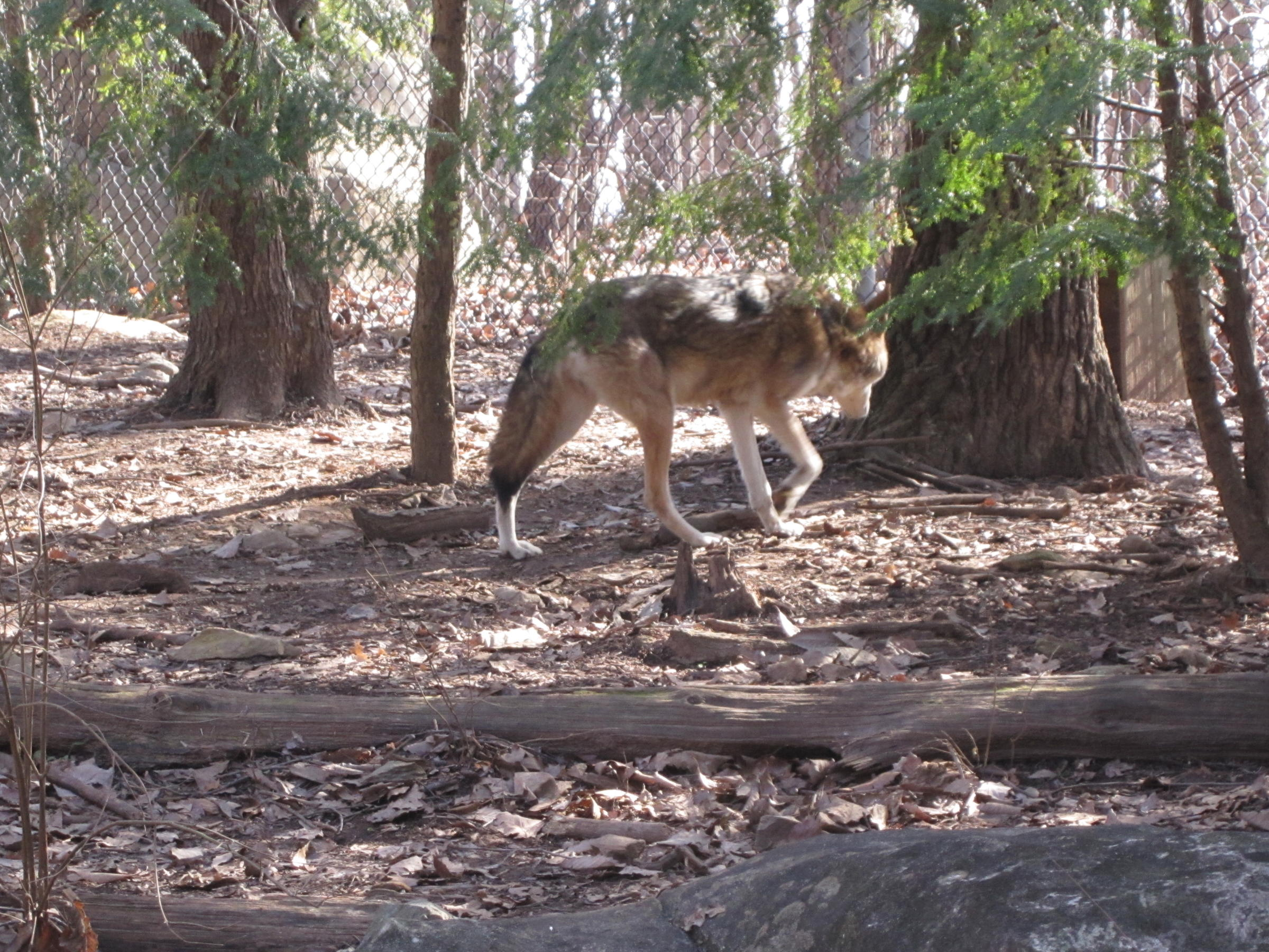 an evaluation of the red wolf recovery program in eastern north carolina Learn more about pinnacle  if you opened your account in north carolina, south carolina or virginia, log in below.