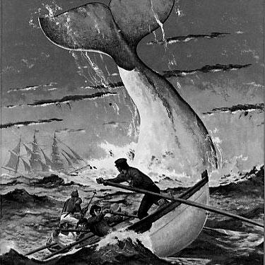 close reading response to moby dick From «moby-dick» to the ten essays collected here demonstrate that the agenda and methods of the more traditional close reading and the more contemporary.
