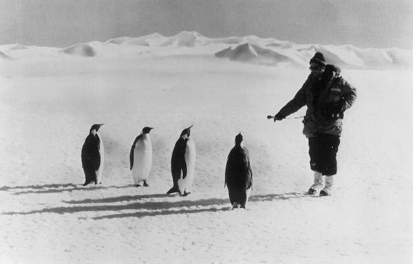 Ira Flatow interviews penguins in Antarctica for NPR in 1979