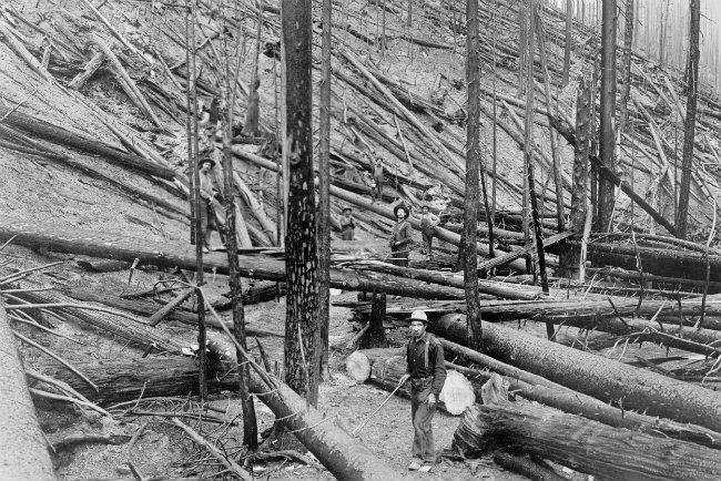 "Result of a wildfire ""hurricane"" in a heavy stand of Idaho white pine on Little North fork of St. Joe River, Coeur d'Alene, Idaho, 1910."