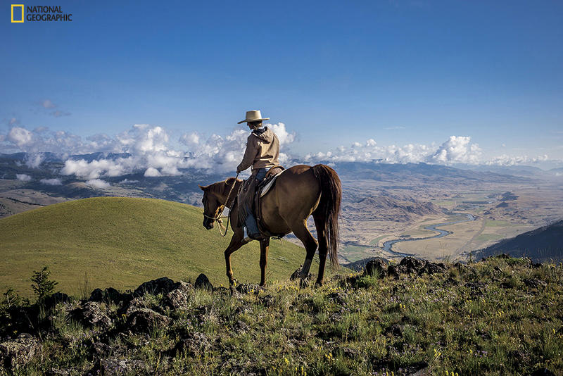 Tom Miner Basin, north of Yellowstone, is home to ranch land and to predators that travel in and out of the park. Hilary Anderson rides near the family ranch to deter predators by keeping cattle bunched and by showing a human presence on the land.