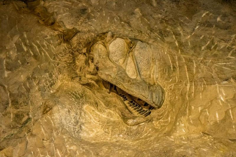 Embedded dinosaur bones.
