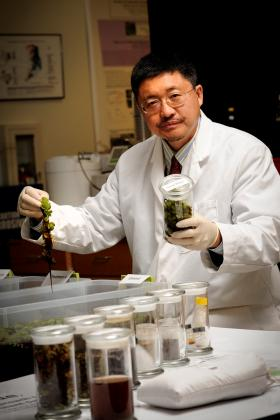 Dr. Shiyou Li is research professor and director of the Center for Pharmaceutical Crops at Stephen F. Austin State University.