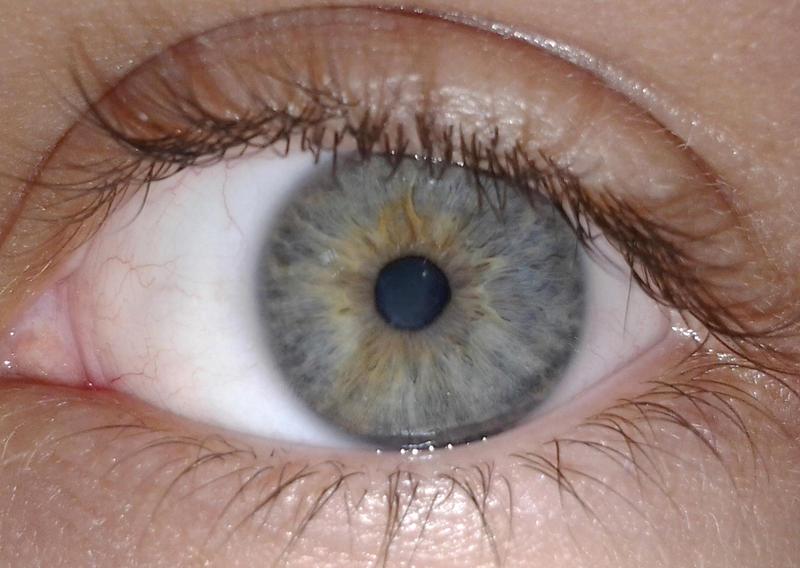 https://en.wikipedia.org/wiki/Eye#/media/File:Ageev_iris.jpg