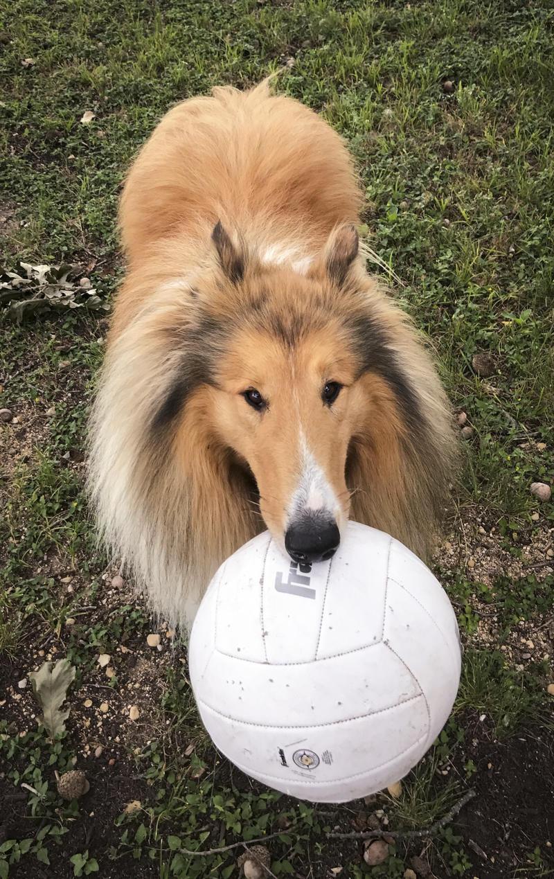 Miles & His Ball