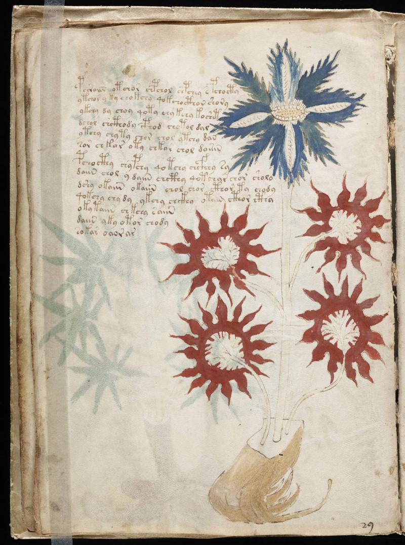 https://commons.wikimedia.org/wiki/File:Voynich_Manuscript_(32).jpg