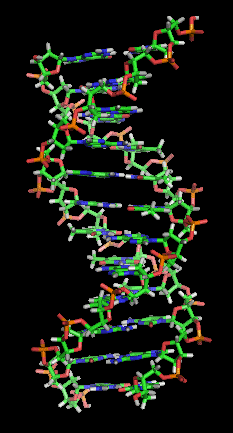 https://commons.wikimedia.org/wiki/File:DNA_orbit_animated_static_thumb.png