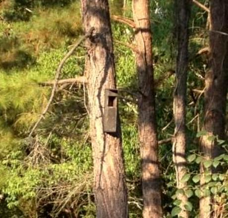 Screech Owl house sent in during Bird Calls