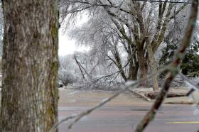 Huge branches snap under the weight of April's ice storm.