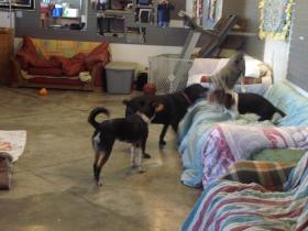 """Play time"" at the Animal Psychology Center"