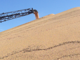 Soybeans pile up at grain elevator