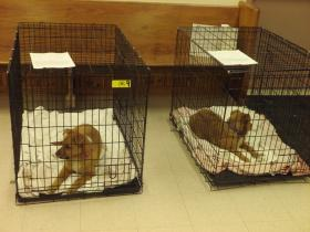 Rez dogs from the Pine Ridge Reservation await their turn at the Lakota Animal Health Care Project spay & neuter clinic.