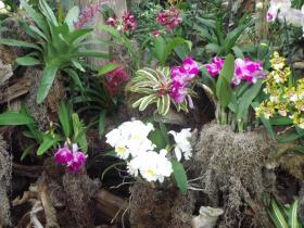 A variety of orchids are one of the primary highlights at the botanic gardens.