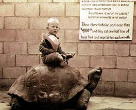 Johnny Brockelsby - at 3 years old - sitting on the legendary giant  tortoise Methuselah; circa 1953.