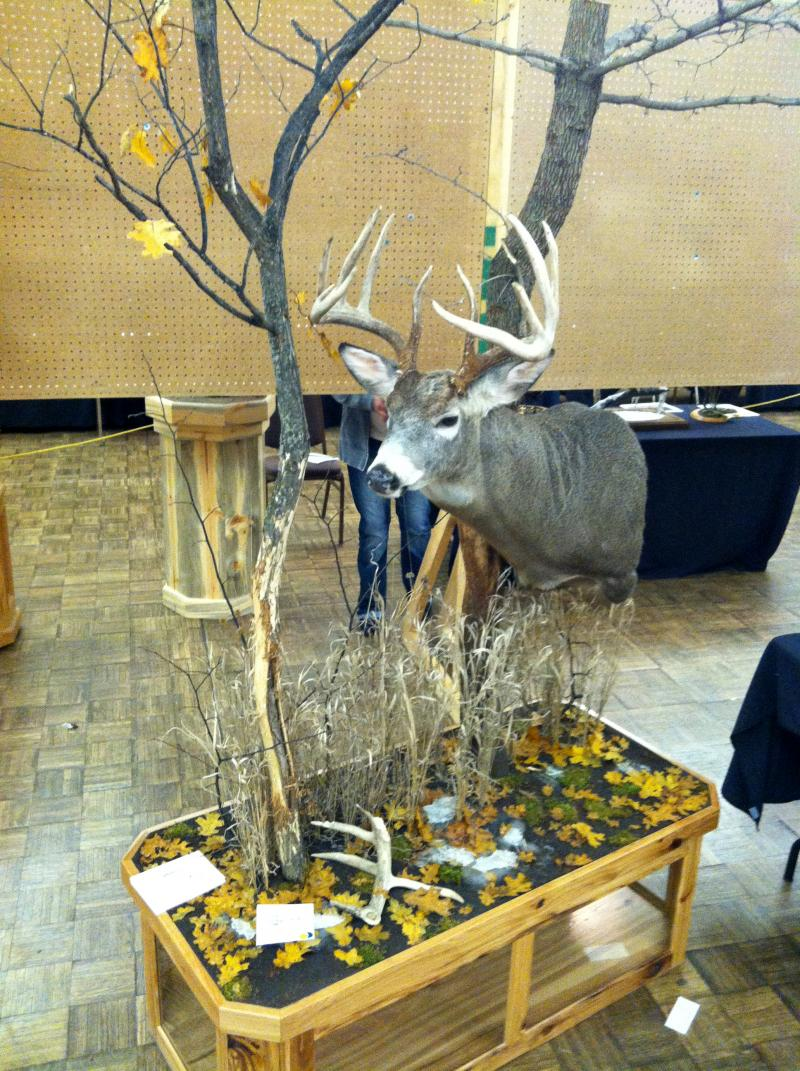 SD Taxidermist Assoc. Competition, 2013