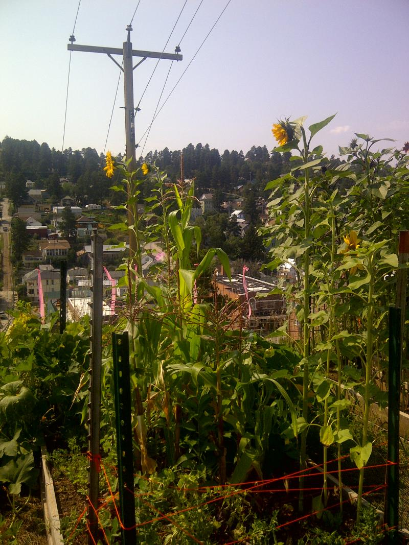 View from Lead's Mile High Community Garden