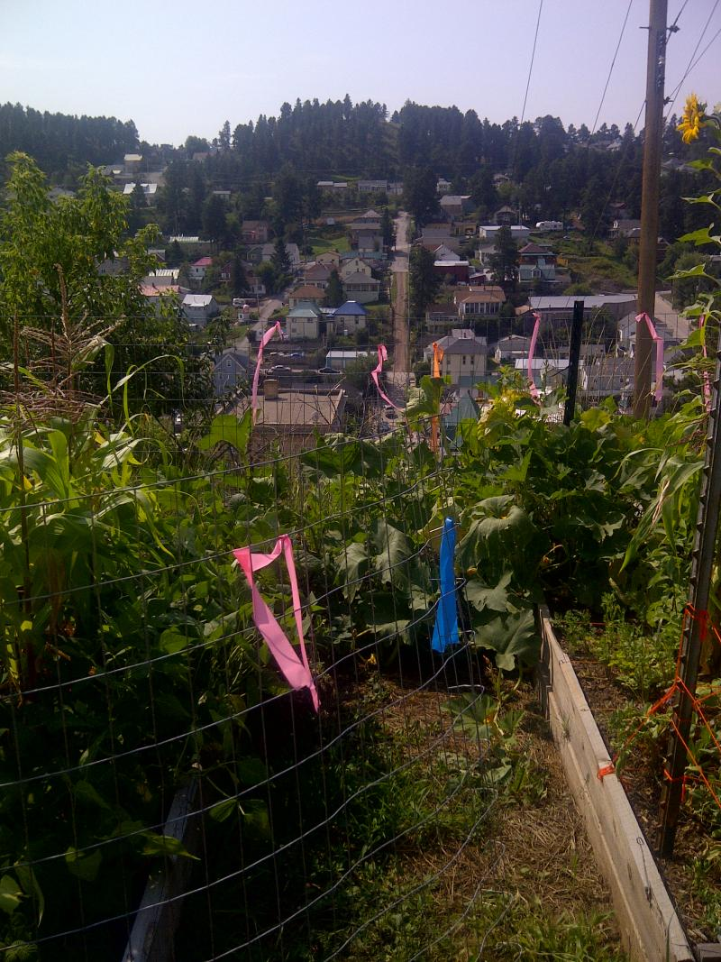 Lead's Mile High Community Garden