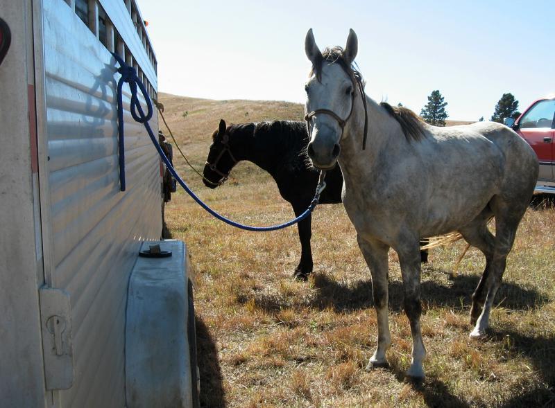 Horses ridden by Scott Wicks and Barb Mechaley Wicks.