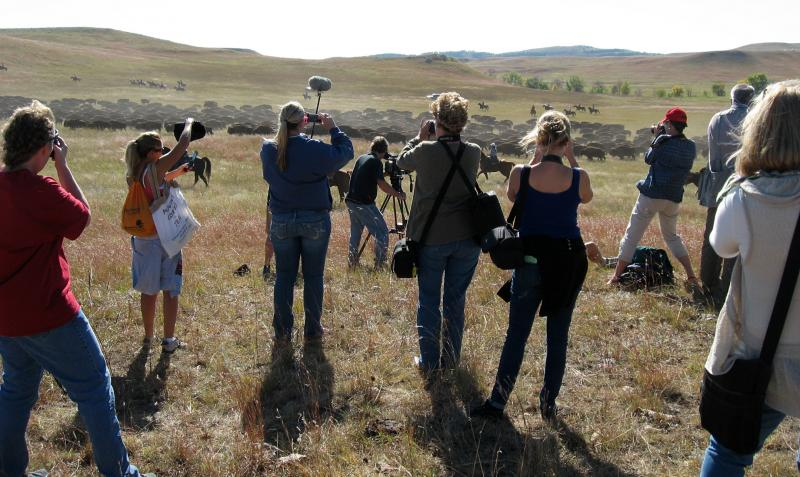 Journalists shoot photos of bison as they pass by the viewing area.