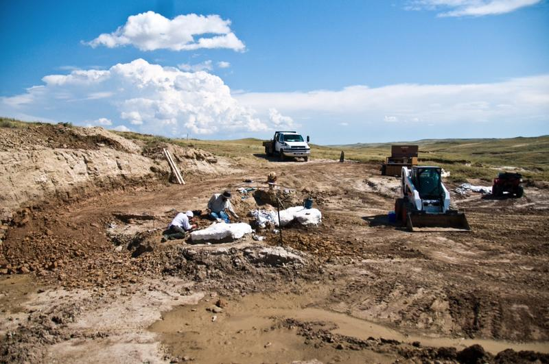 A team excavates triceratops fossils in Wyoming.