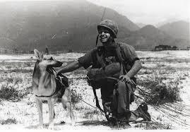 USAF combat dog