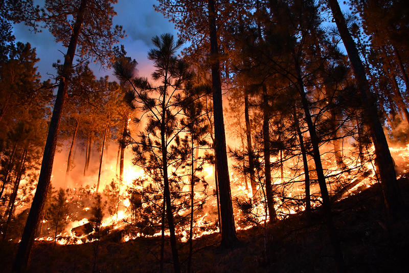 fire in Custer State Park
