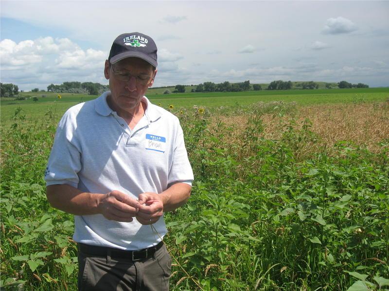 Brian Stambaugh stands in a field of grain.