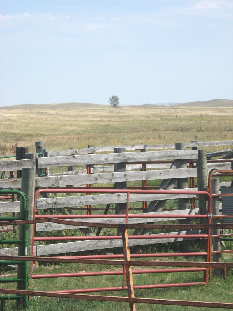 The cottonwood can be seen in the distance from the corral near the Bombing Range Art Studio.
