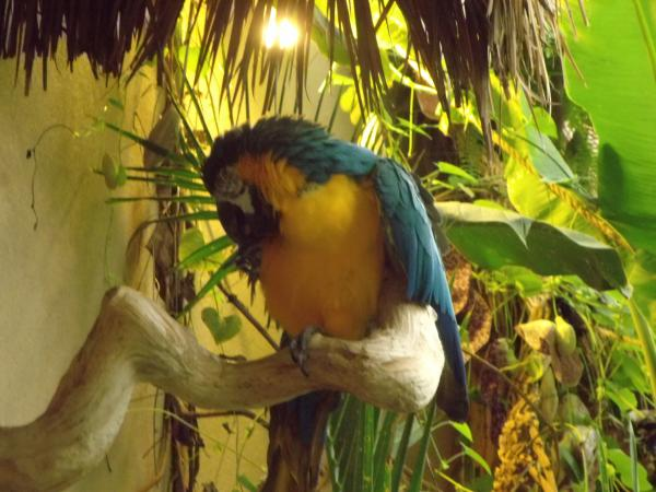There's more to the Reptile Gardens than creepy, crawly things - such as this camera-shy but very vocal parrot in the botanic gardens