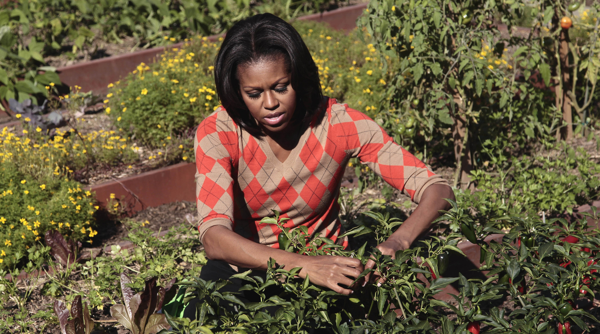 The First Lady Cultivates 39 American Grown 39 Gardening Delmarva Public Radio