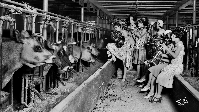 Moo-d Music: Do Cows Really Prefer Slow Jams? | WLRN