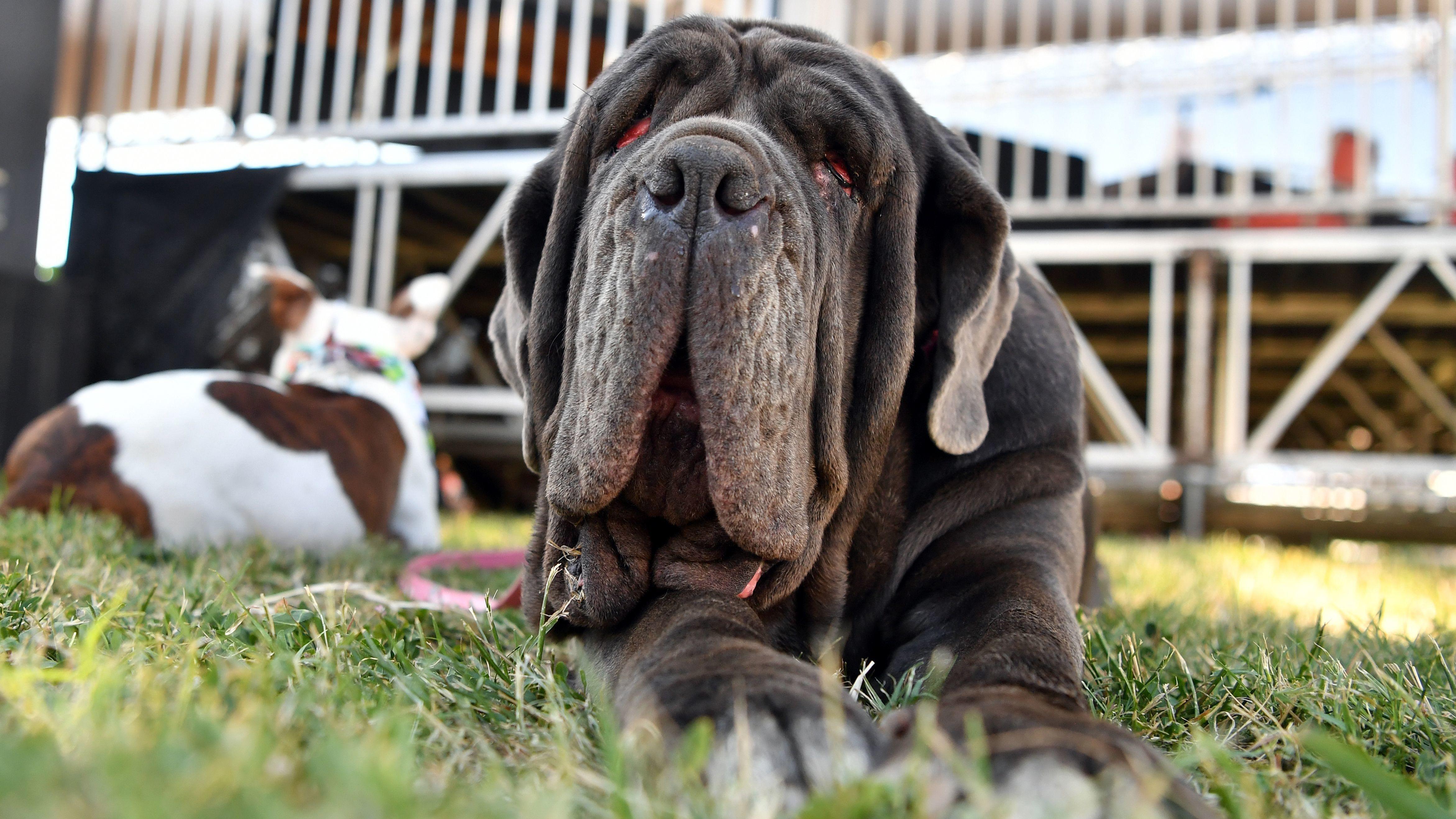PHOTOS: Meet Martha, World's Ugliest Dog | KCUR