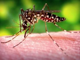 Dallas Sprays Mosquitoes Again Tonight