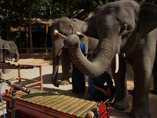 A member of the Thailand Elephant Orchestra gets ready to play just before the recording session for the group's third CD.