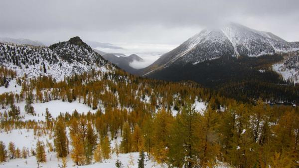 The snowpack in the Rocky Mountains has been gradually thinning over the past century. Using tree ring measurements from subalpine larch trees like these in the Lake Chelan Wilderness in Washington State, researchers were able to put the Rocky Mountain data in long-term historical context.