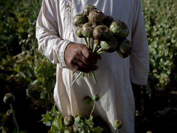 An Afghan holds a bouquet of poppies near the city of Kandahar, Afghanistan.