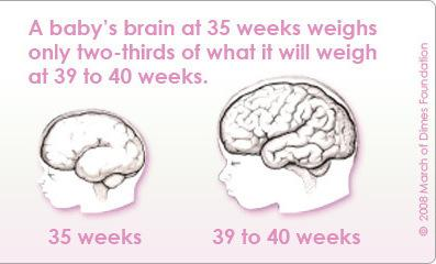 A baby's brain still has a lot of growing to do between 35 and 39 weeks in the womb.