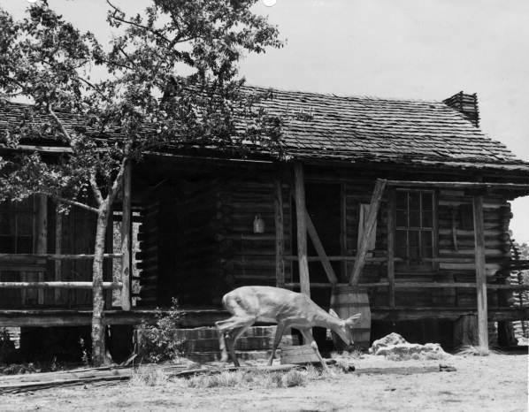 A deer near Forrester Place farm in Florida, photographed in 1940 during pre-production and location scouting for the MGM film <em>The Yearling.</em>