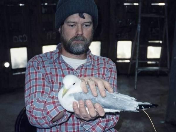 USGS biologist Scott Hatch holds an adult black-legged kittiwake inside the research tower on Middleton Island.