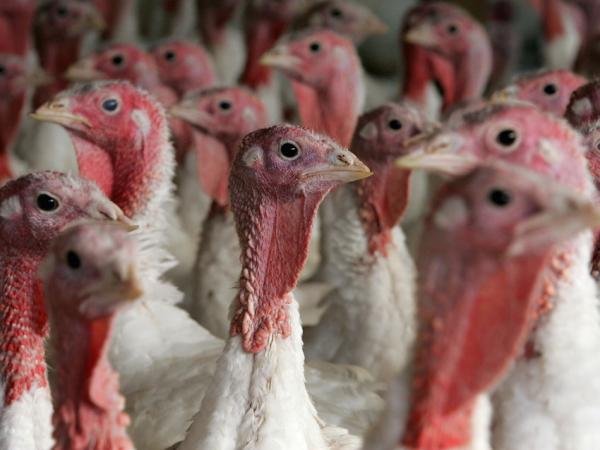 Poultry farms and other livestock operations often use antibiotics to promote growth, which can lead to antibiotic-resistant strains of bacteria such as salmonella.