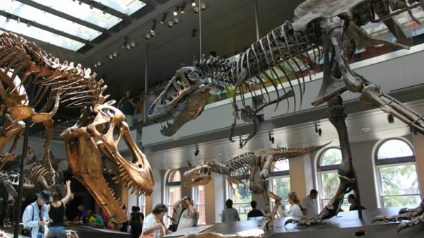 At the center of the new Dinosaur Hall at the Natural History Museum of Los Angeles is a display on T. rexes' growth and eating habits.