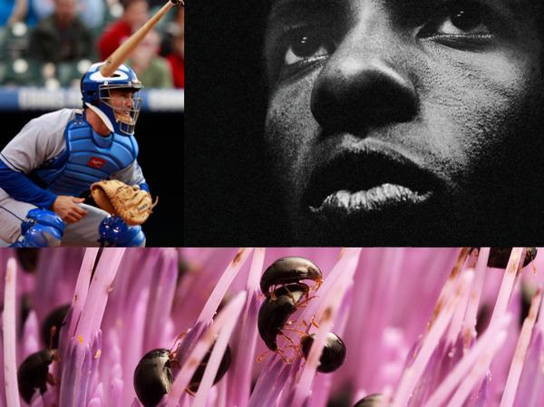 Clockwise from left to right: Brad Ausmus, Sly Stone, shining flower beetles.