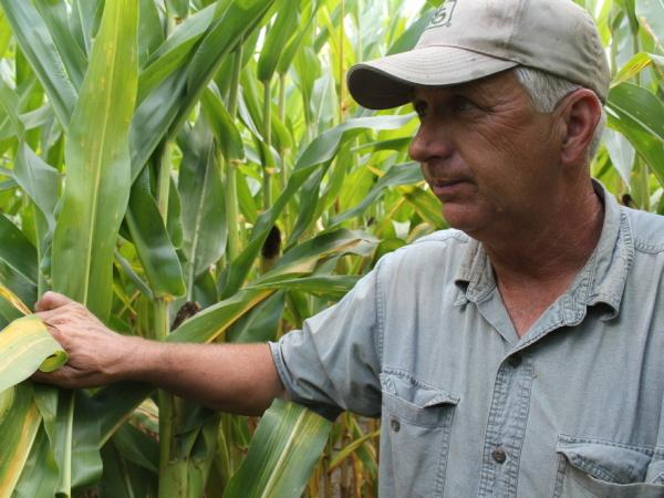 Corn grower Vernon Flinn is hoping for rain to boost his yields this year. Corn prices have doubled since last summer, and farmers are gunning for as high bushels per acre as possible.